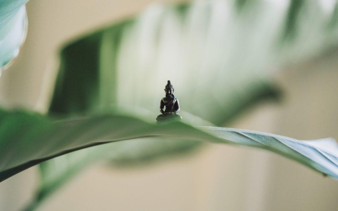 5 Element Workshop – Yin Flow & Myofascial Release
